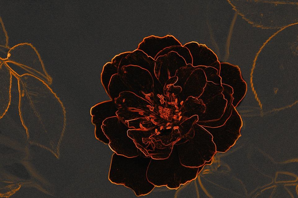 anime hoa hồng
