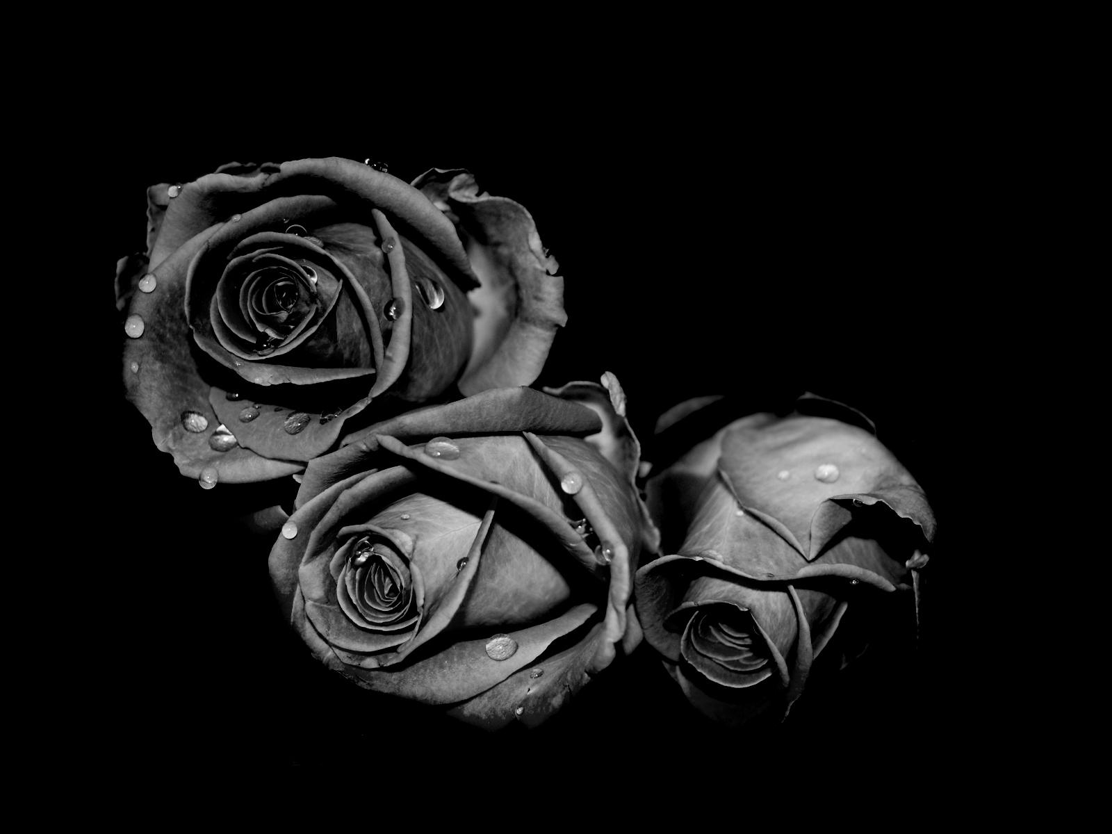 tải hình ảnh màu đen