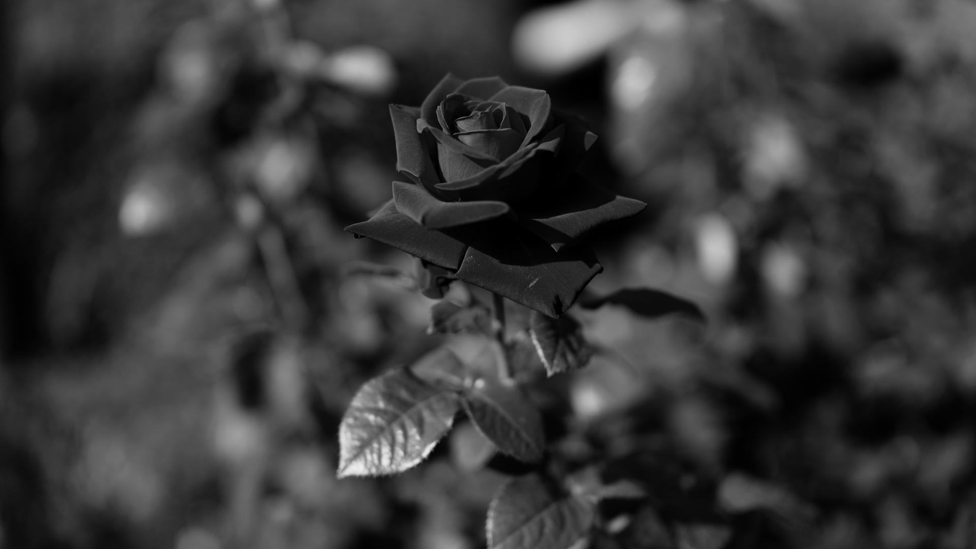những hình ảnh trắng đen đẹp