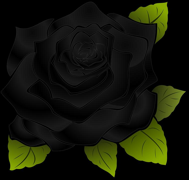 thuyết minh về loài hoa hồng