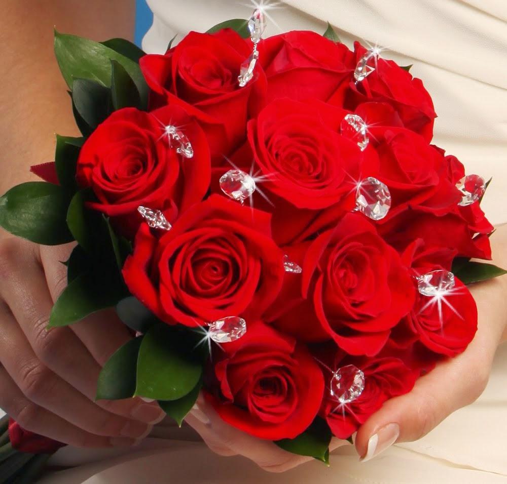 ảnh hoa hồng masora