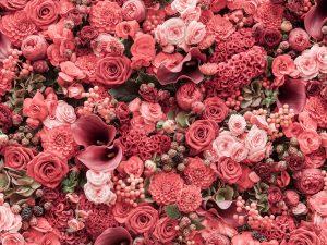 ảnh quotes hoa hồng