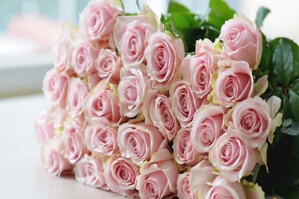 ảnh xăm hoa hồng ở bả vai