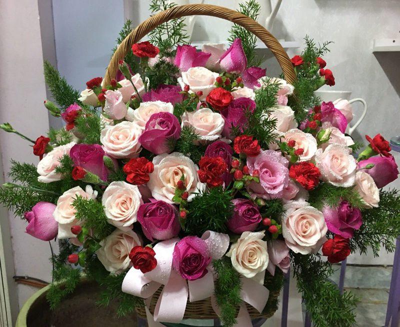 ảnh hoa hồng xanh đẹp nhất thế giới