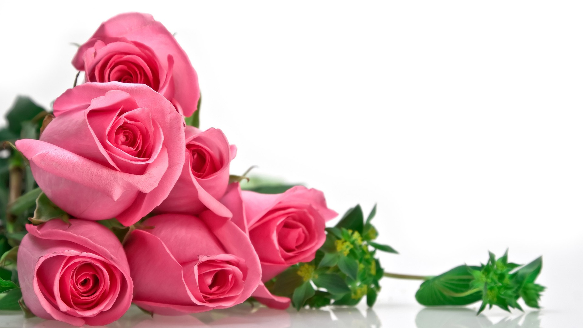 ảnh hoa hồng tình yêu đẹp