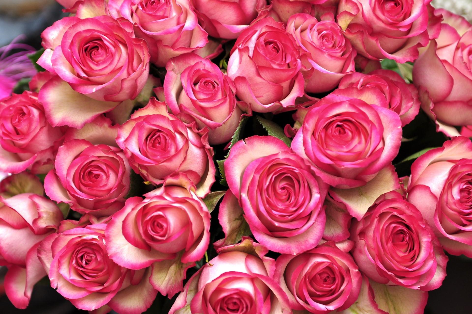 ảnh hoa hồng ngày 20-10