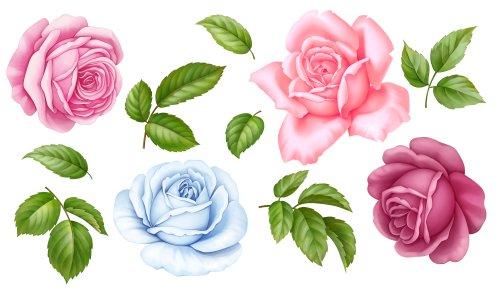 xem ảnh hoa hồng tình yêu