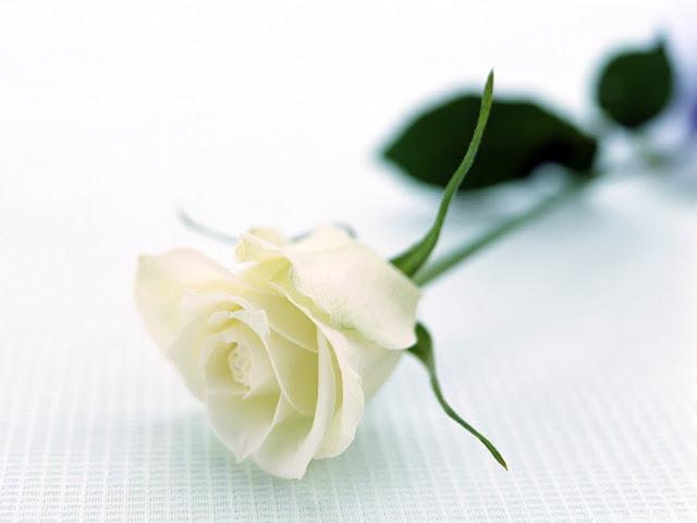 hình ảnh ăn hoa hồng