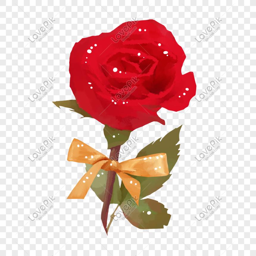 ảnh hoa hồng avatar