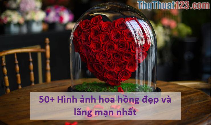 hình ảnh hoa hồng 4k