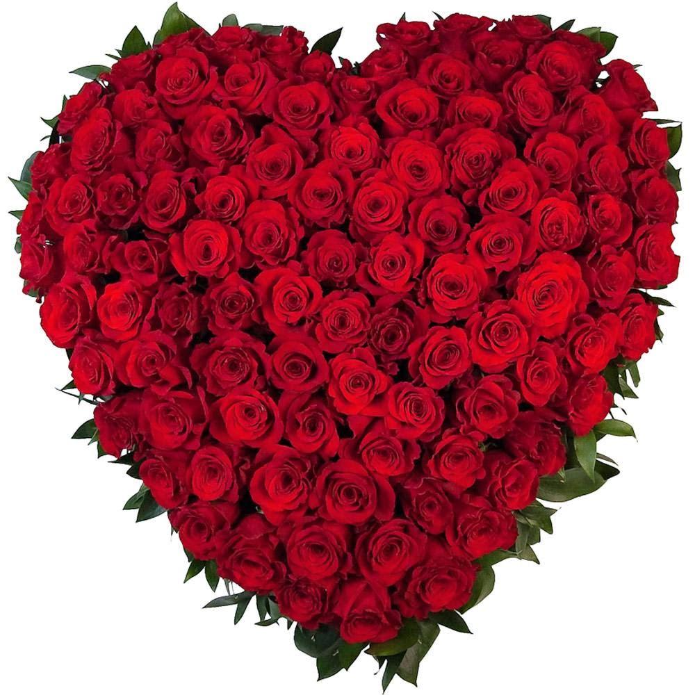 ảnh hoa hồng ngoại