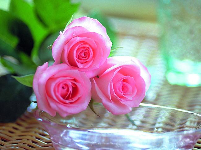 hình ảnh hoa hồng quế