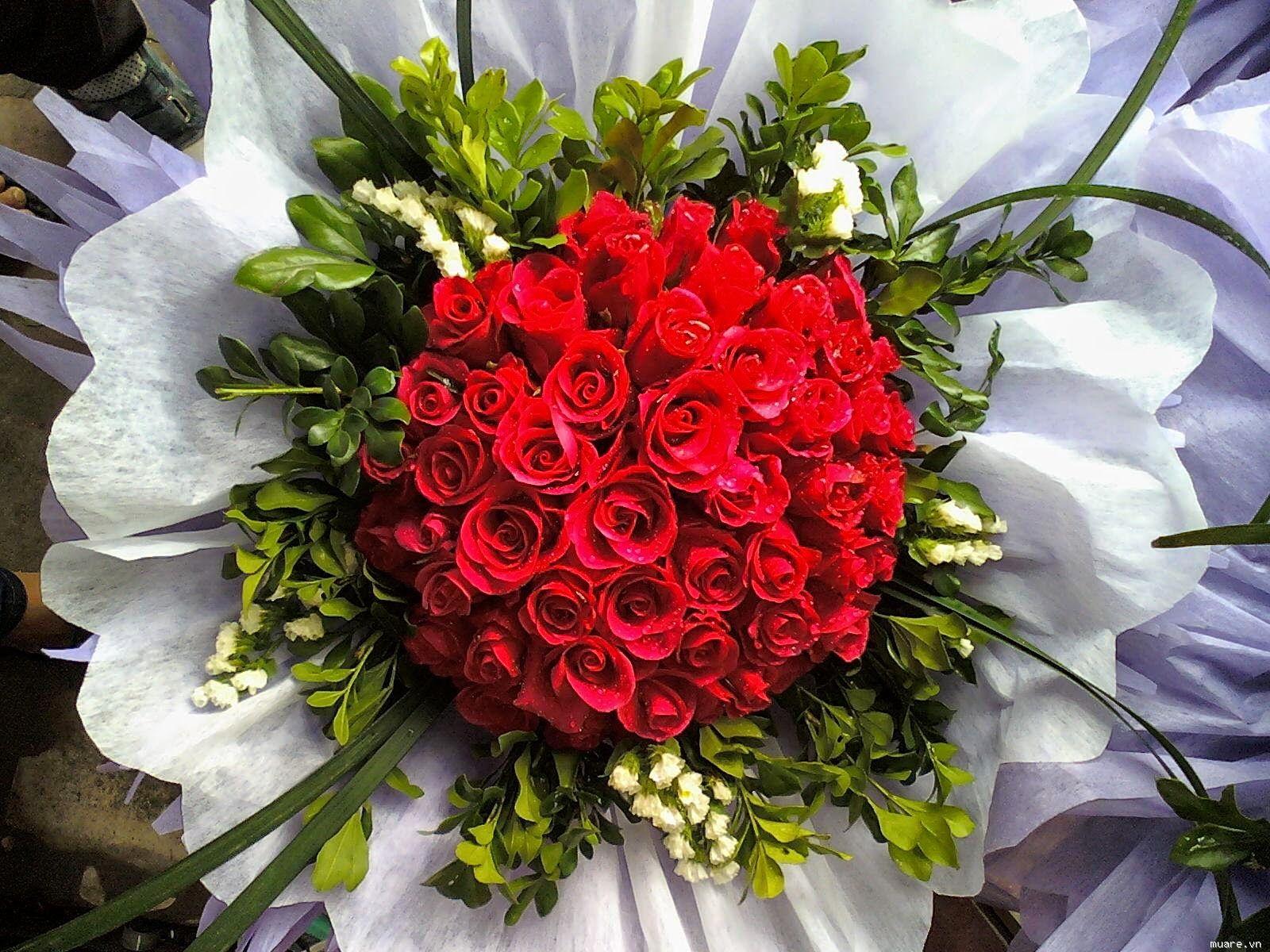 ảnh hoa hồng siêu đẹp