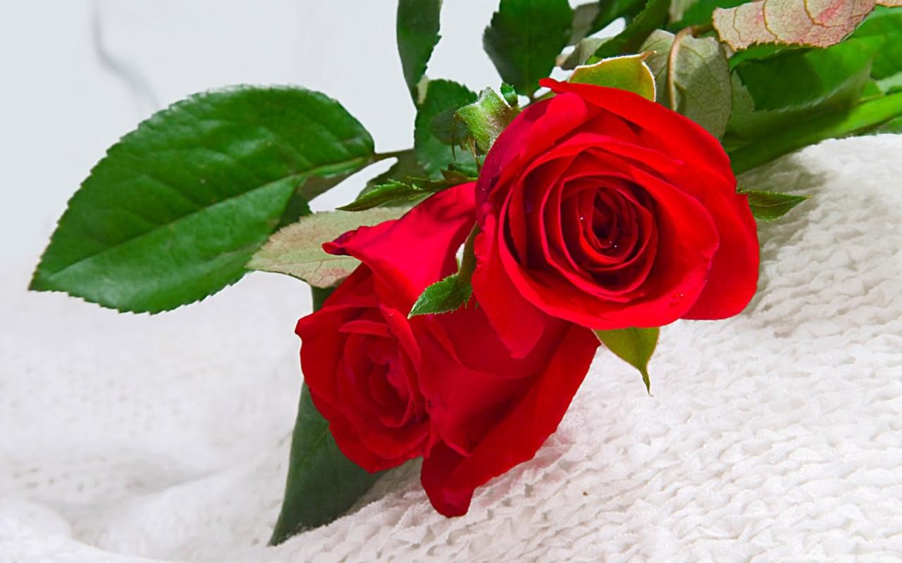 ảnh 999 đóa hoa hồng