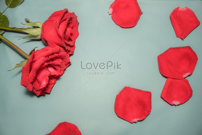 ảnh hoa sen hồng đẹp nhất