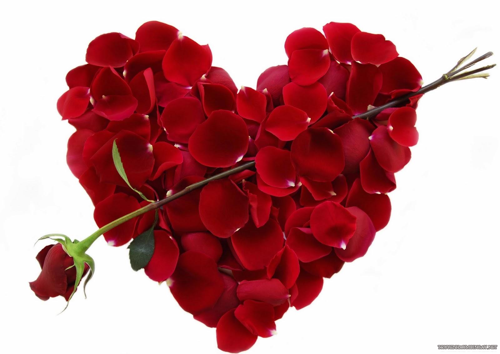 hình ảnh hoa hồng ri