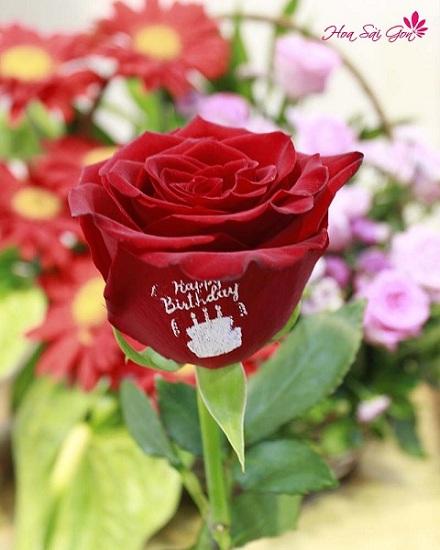hình ảnh hoa hồng héo