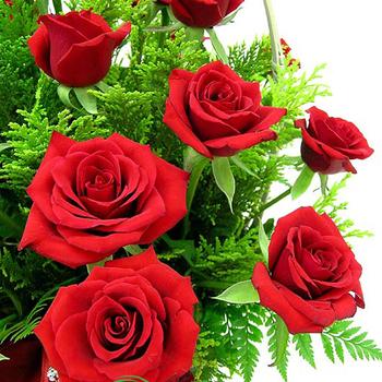 hình ảnh hoa hồng máu