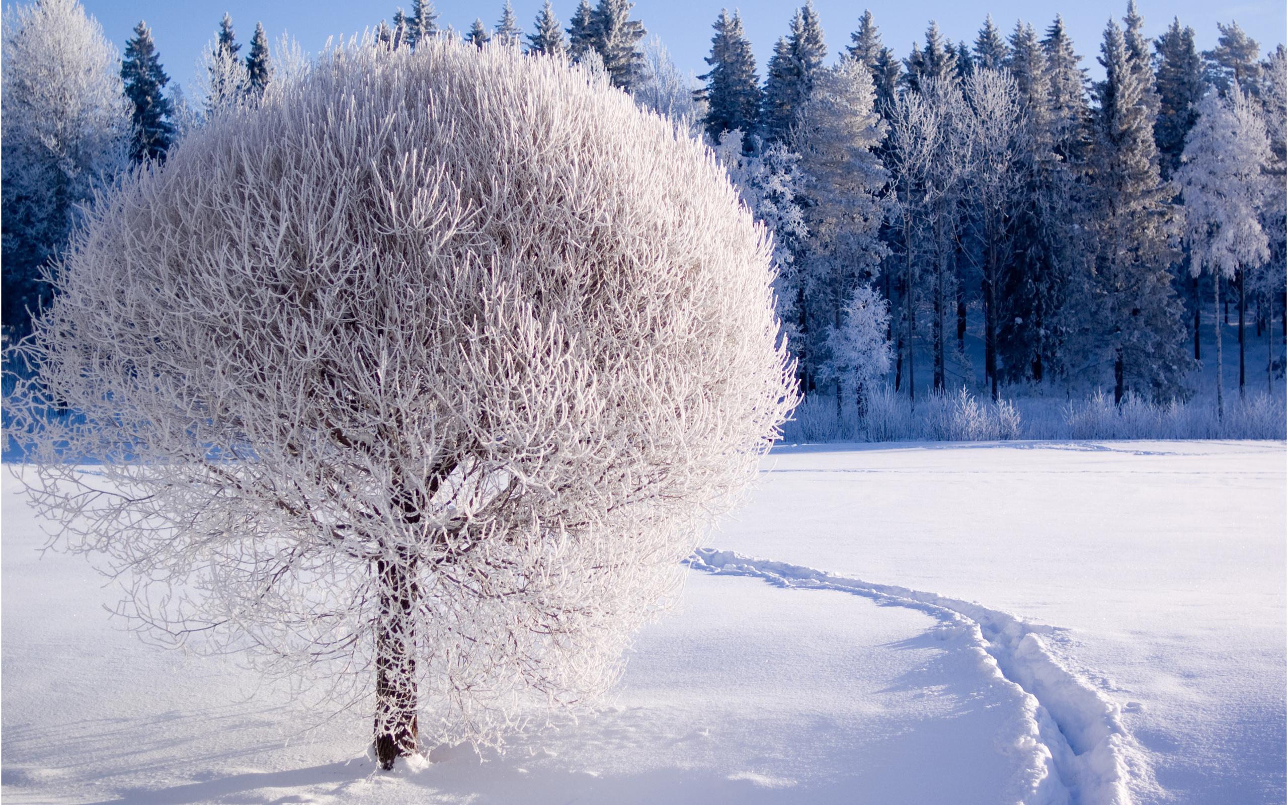 cảnh mùa đông buồn