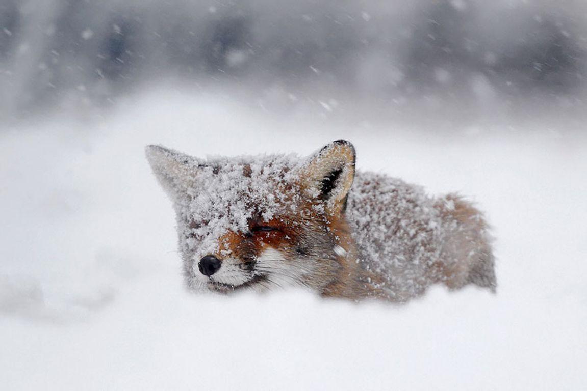 hình ảnh mùa đông hàn quốc