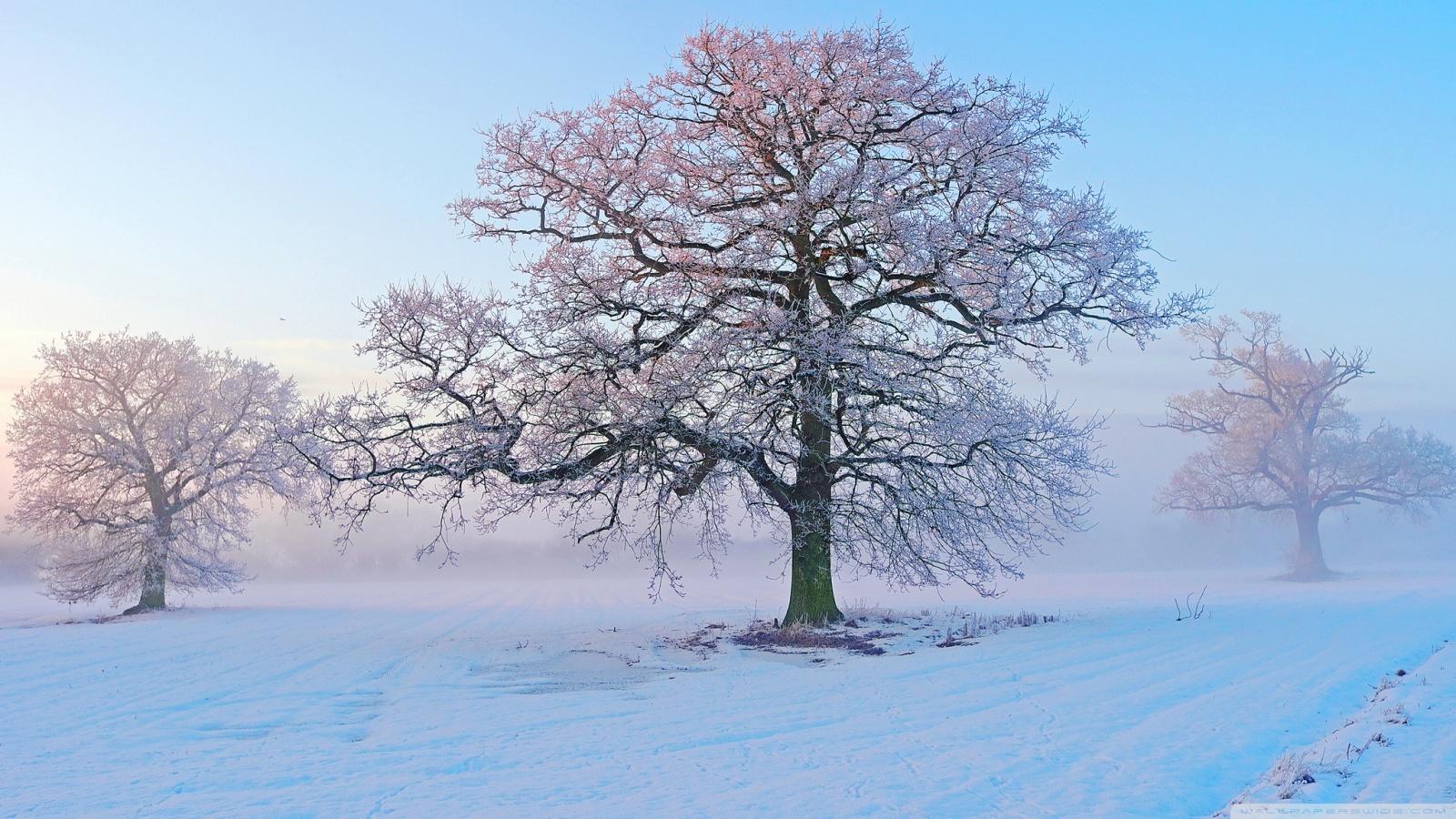 ảnh gió mùa đông