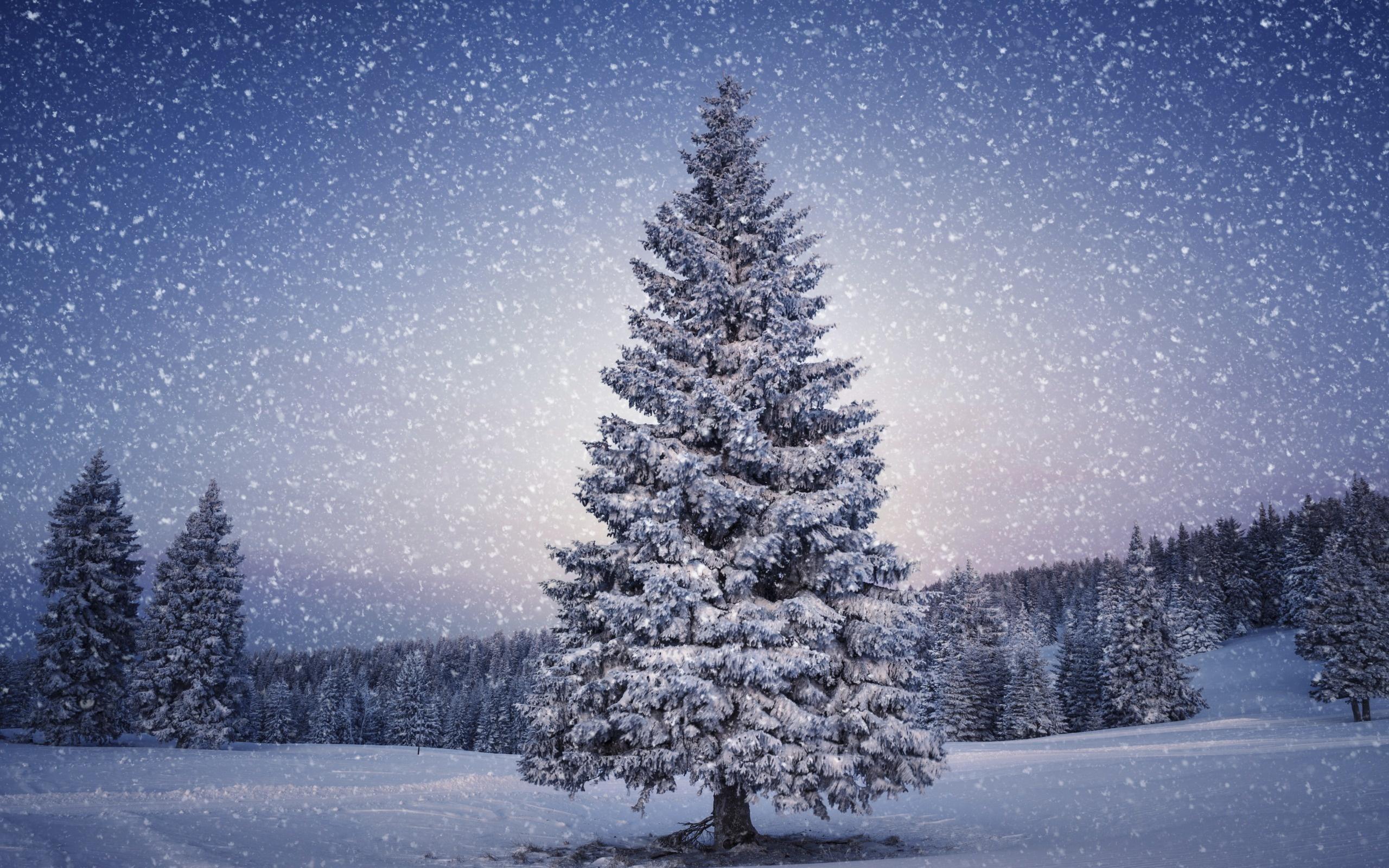 hình ảnh khăn mùa đông
