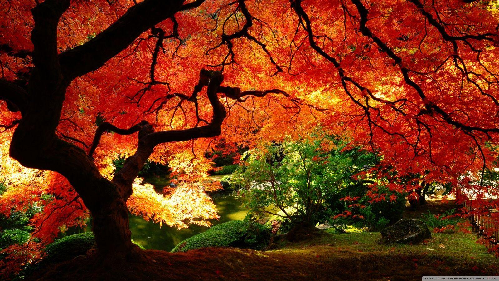 ảnh đẹp mùa thu việt nam