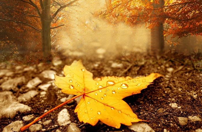 hình ảnh mùa thu