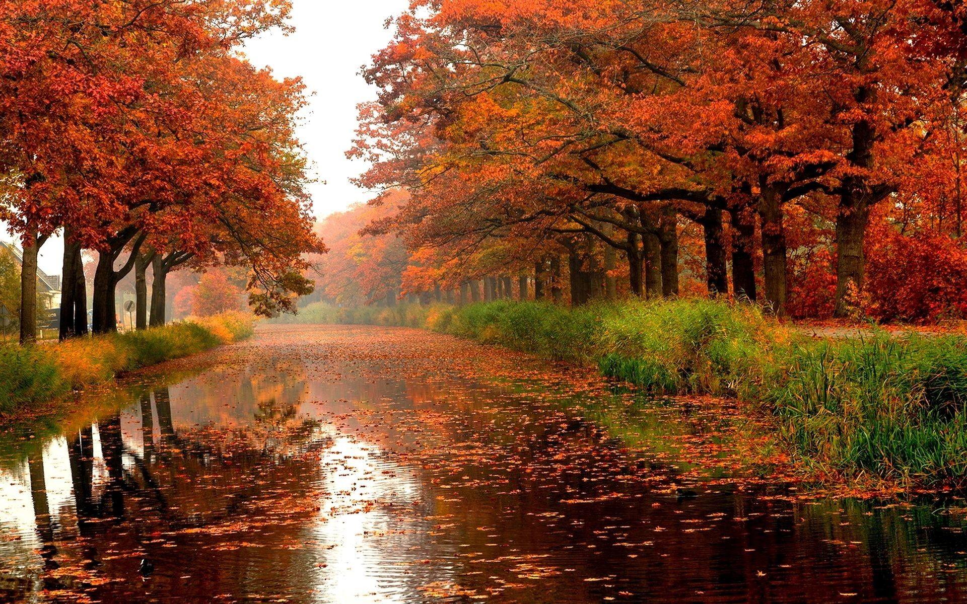 hình ảnh gió mùa thu