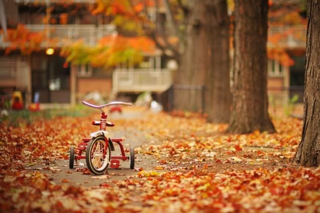ghép ảnh mùa thu