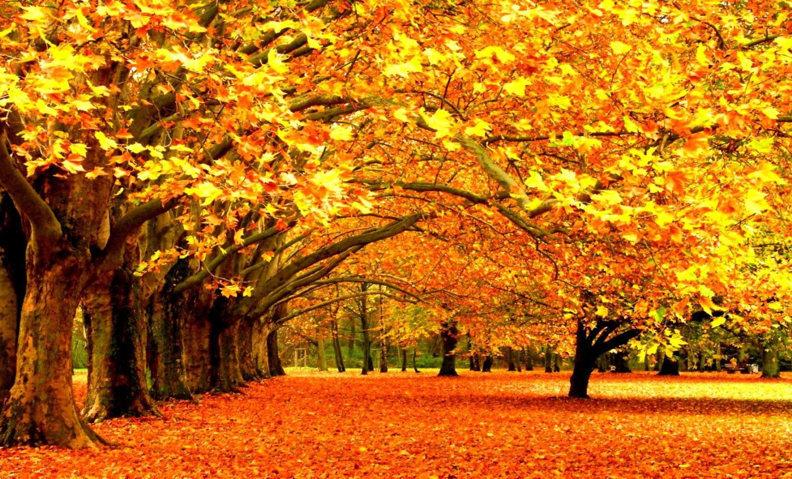 hình nền lá mùa thu