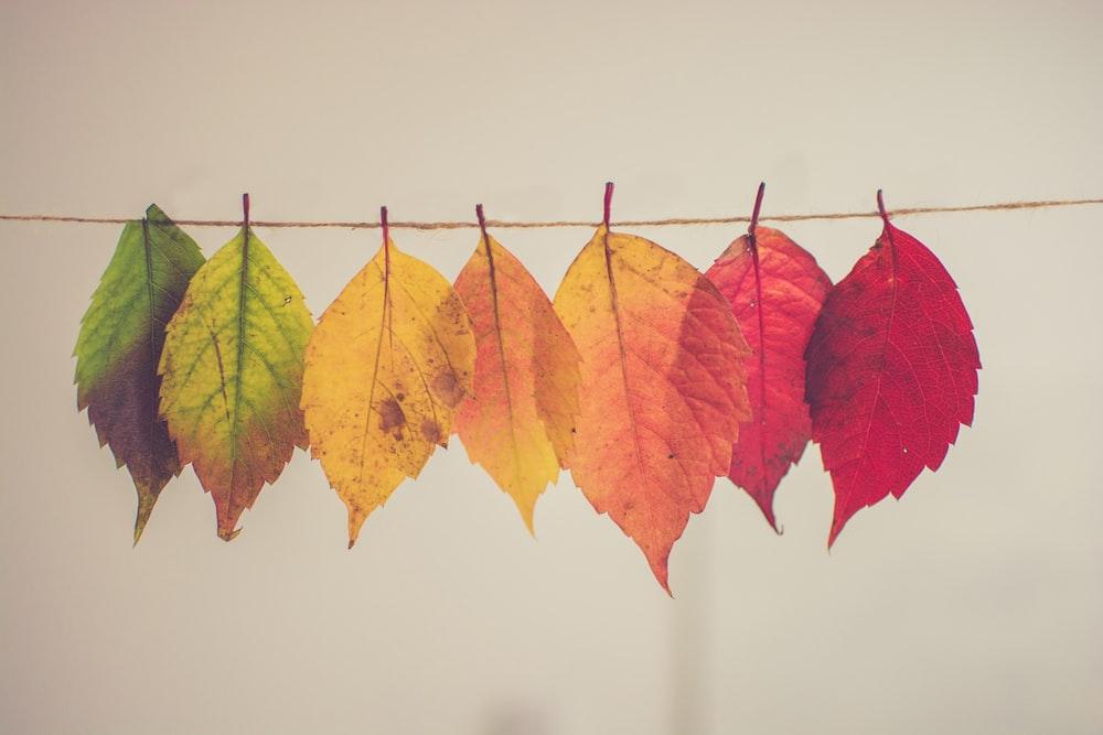 hình ảnh đẹp mùa thu hàn quốc