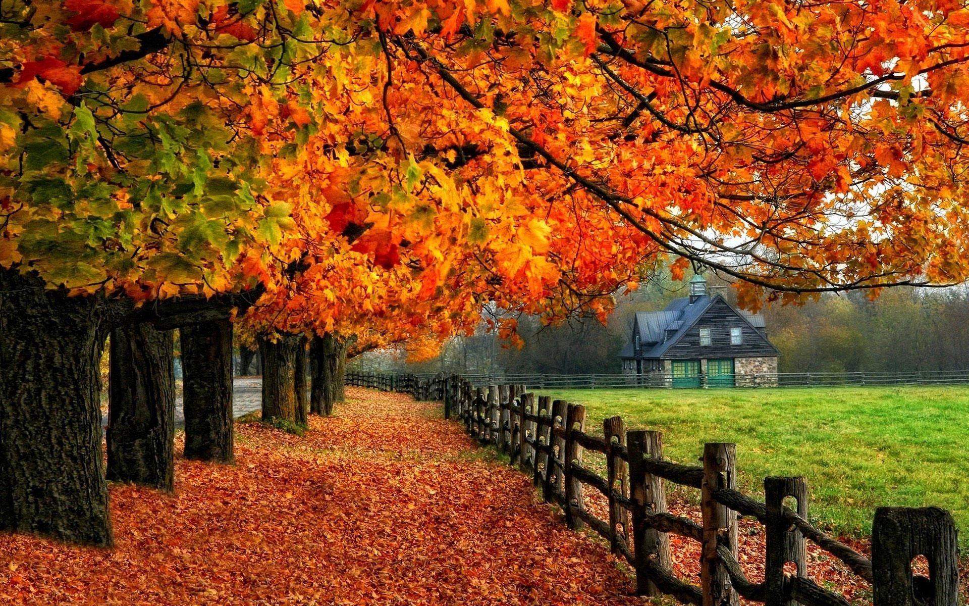 ảnh mùa thu lá bay