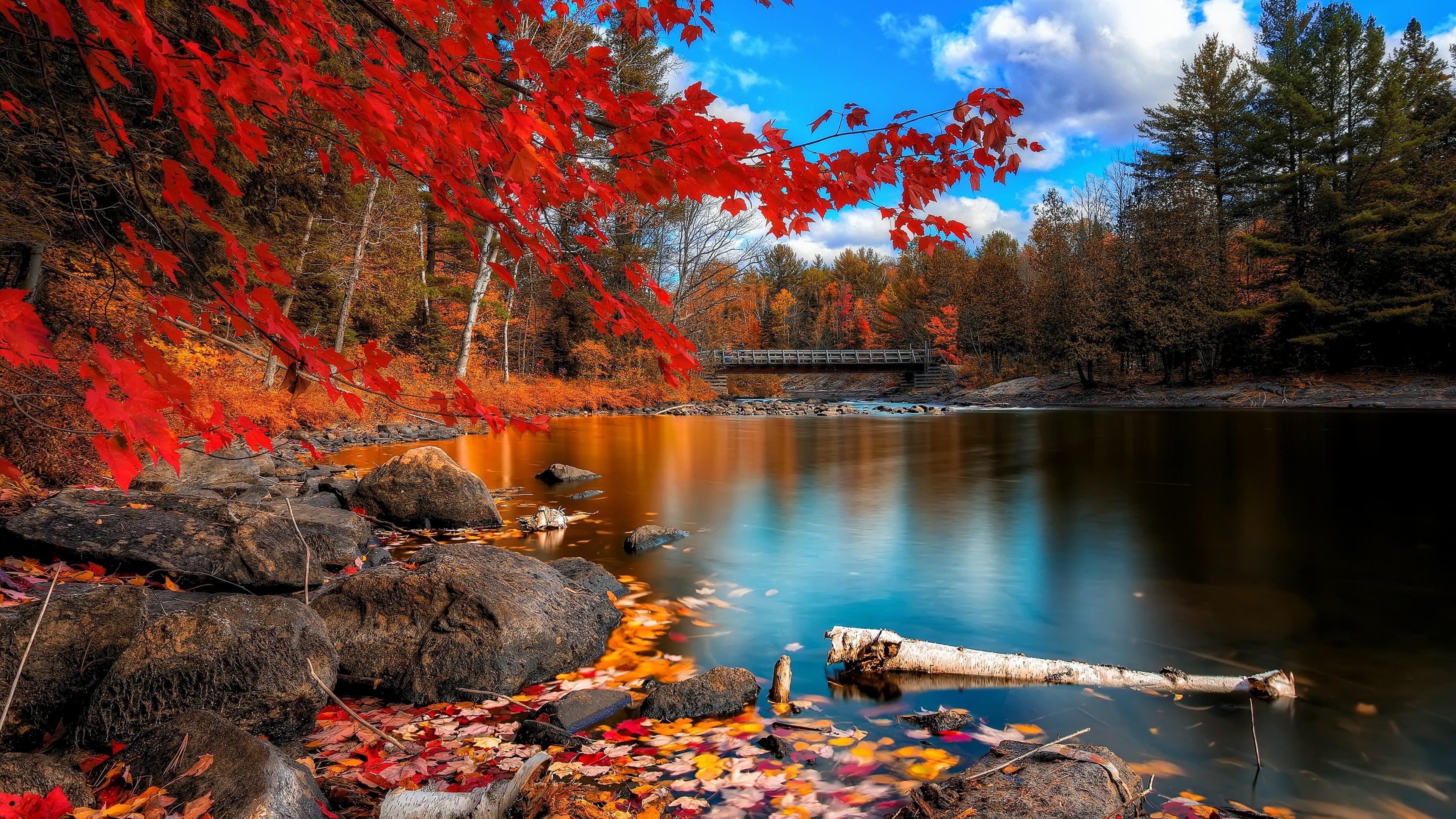 ảnh dẹp về mùa thu