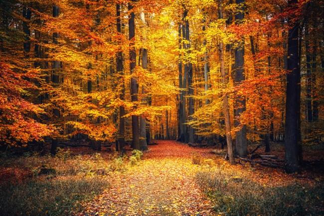 hình nền mùa thu cho điện thoại