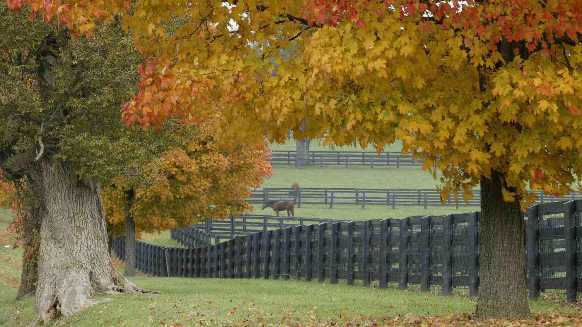 hình ảnh mùa thu cây