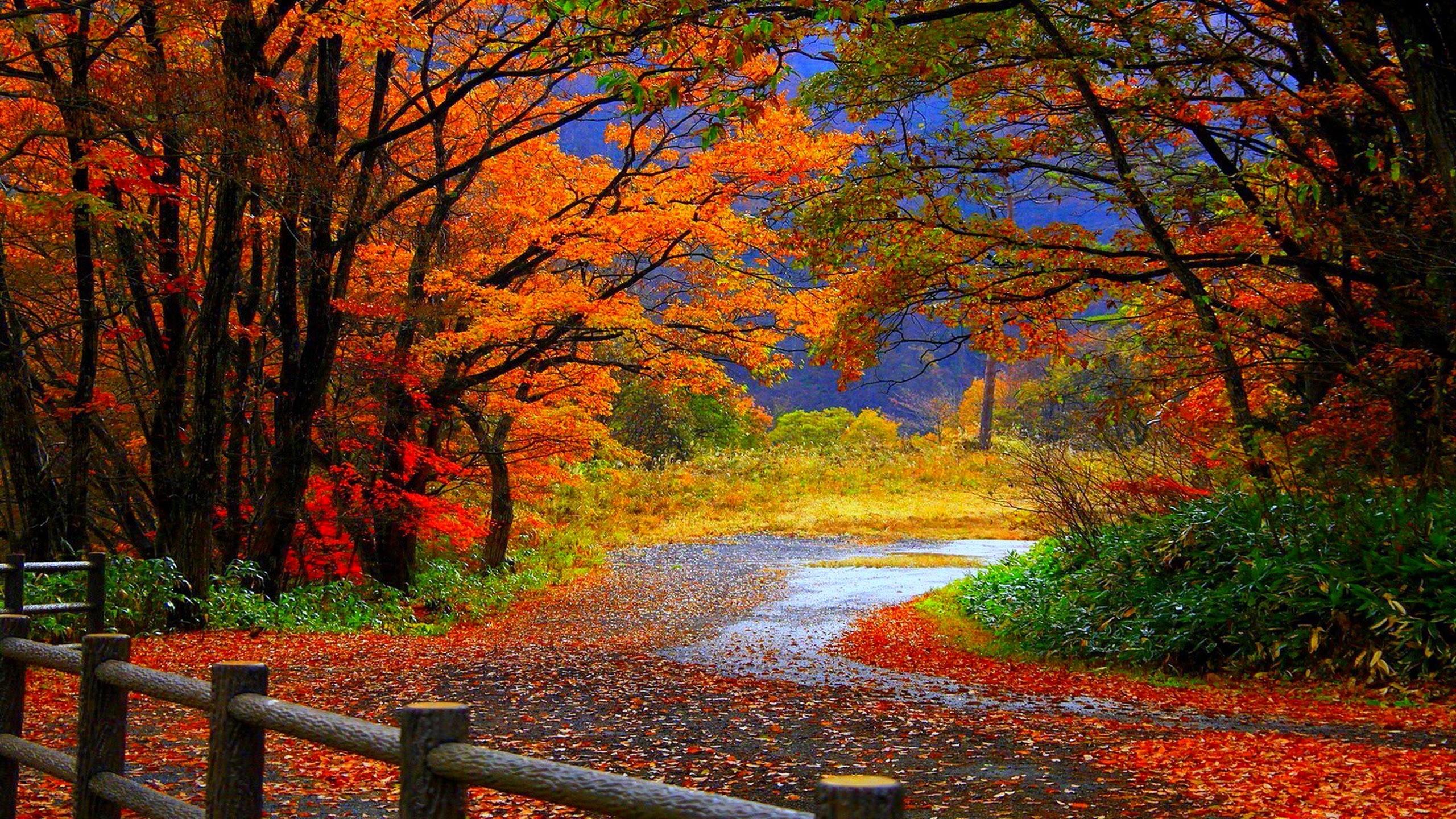 hình ảnh mùa thu cô đơn