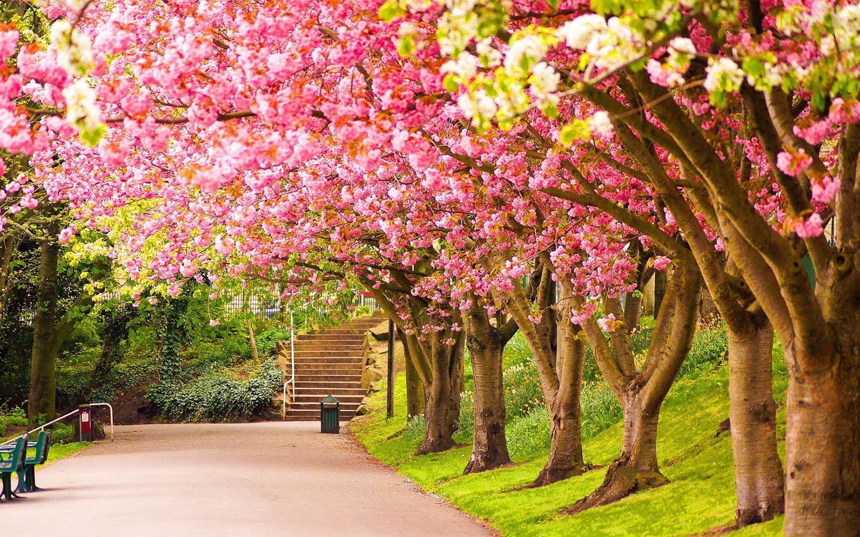 hình ảnh mùa xuân thiên nhiên