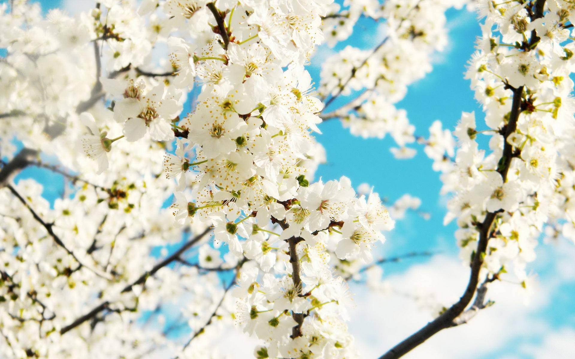 hình nền mùa xuân cho máy tính