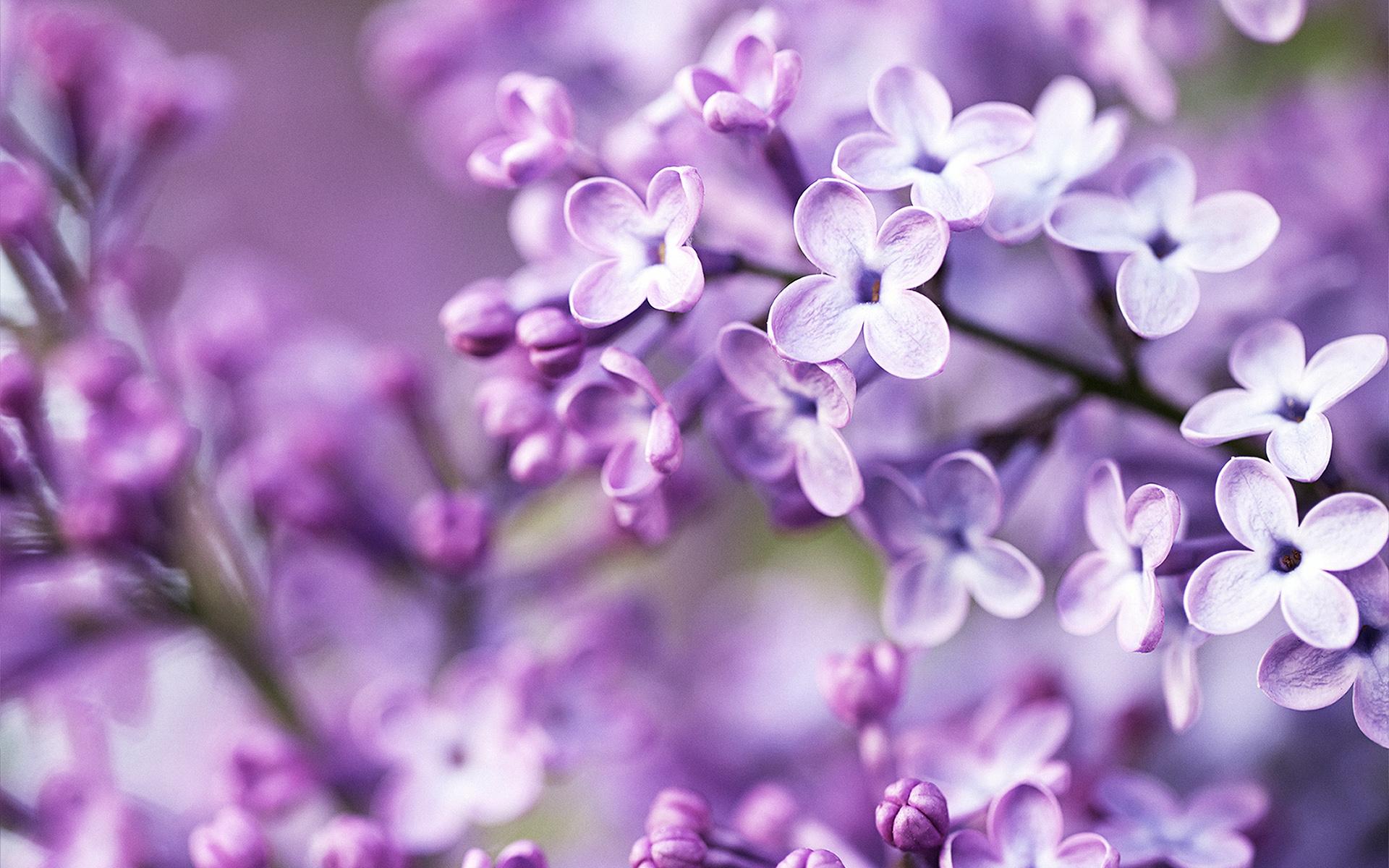 hình nền thiên nhiên mùa xuân