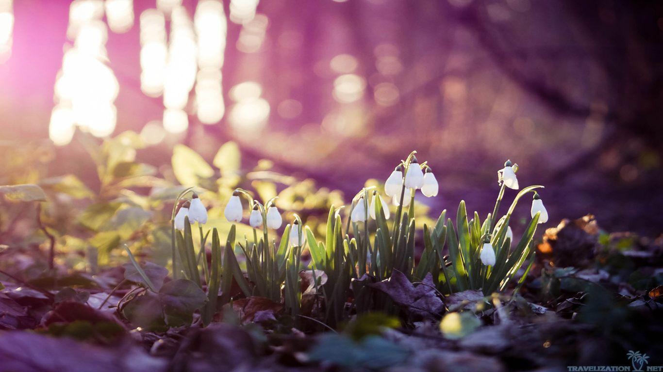 cảnh mùa xuân trong truyện kiều