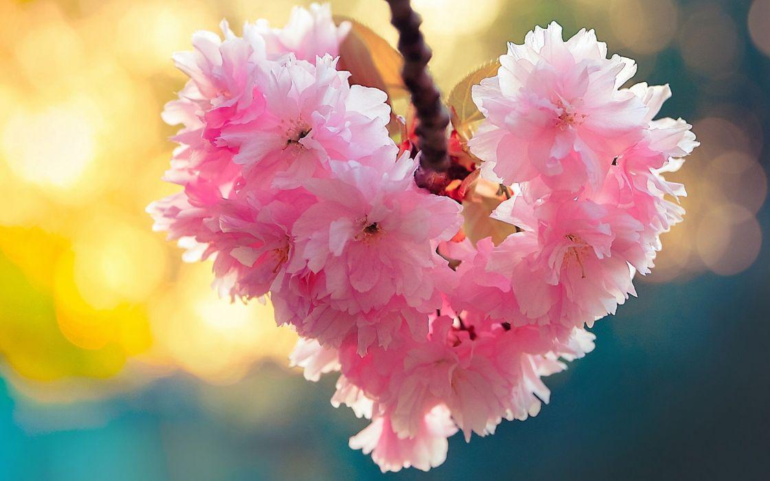 cảnh mùa xuân đẹp