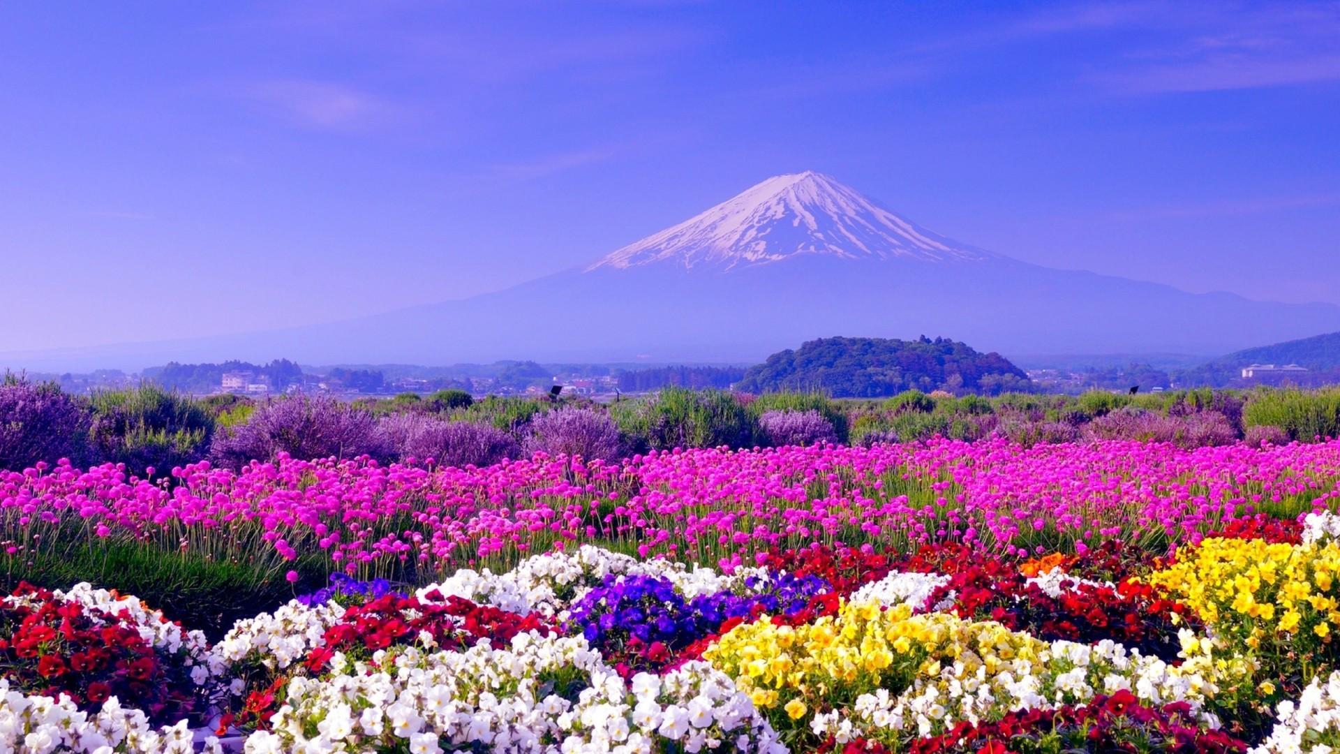 hình ảnh phong cảnh mùa xuân