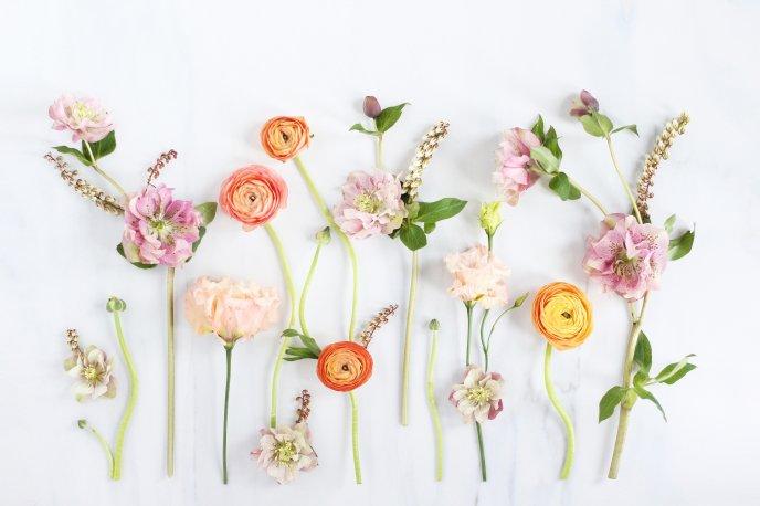 khung ảnh ghép hình mùa xuân