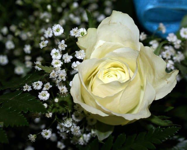 hình động hoa đẹp