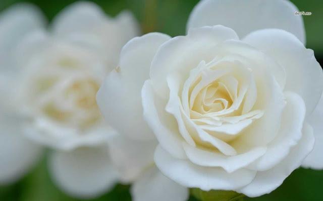 ảnh động hoa đẹp