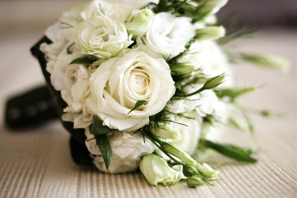 hình ảnh hoa hồng bạch