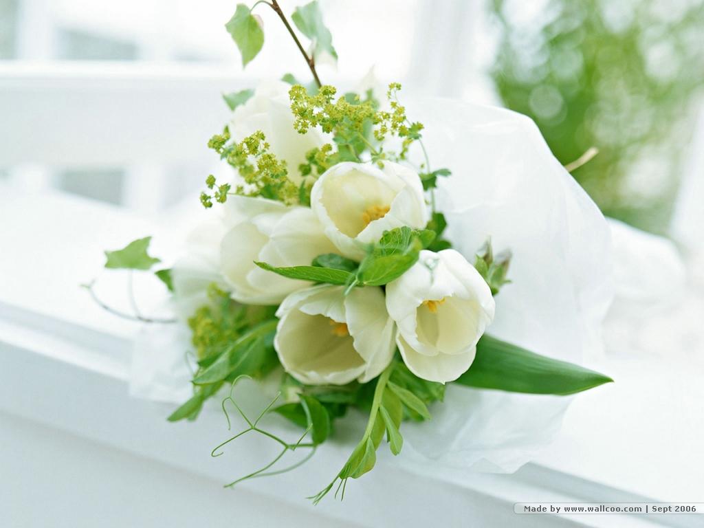 hoa hong trang dep