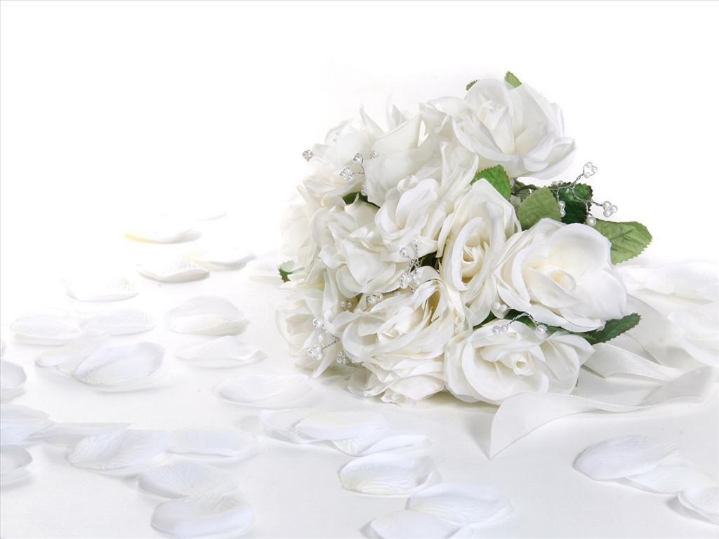 hoa hồng trắng tượng trưng điều gì