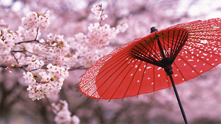ảnh phong cảnh anime hoa anh đào